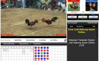 Agen Judi Adu Ayam Online Terpercaya Terbesar di Indonesia